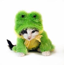 kitten in frog costume